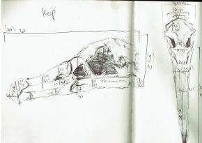 schetsen